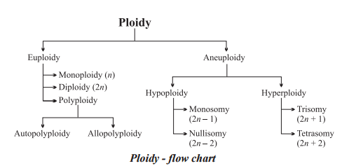 Numerical chromosomal aberrations ploidy flow chart
