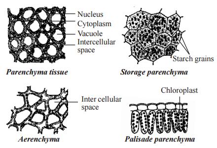 types of parenchyma tissues botany 12 std tamilnadu tn