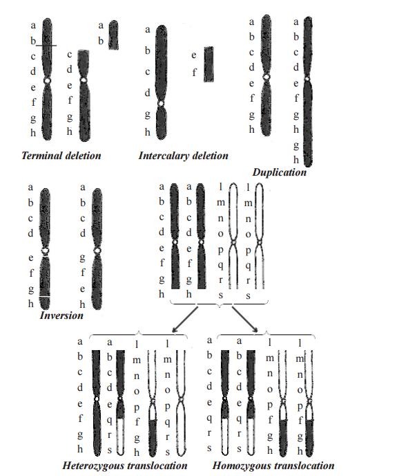 Structural Chromosomal Aberration