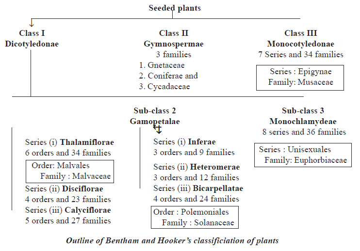 Bentham and Hooker's classification of plants